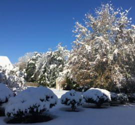 Snow in my backyard in Atlanta